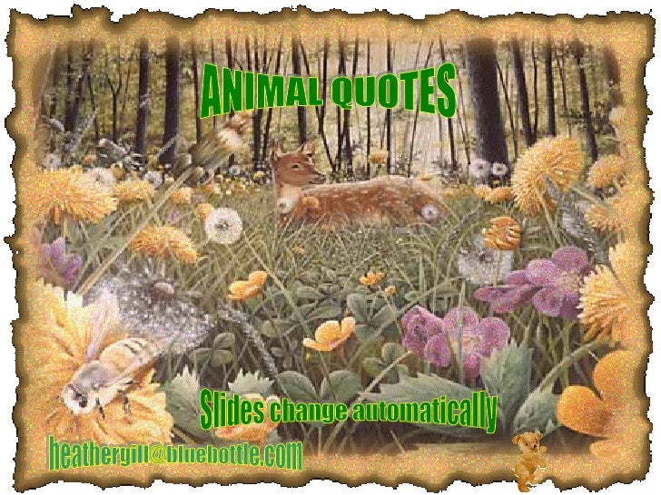 ANIMAL QUOTES [email_address] Slides change automatically
