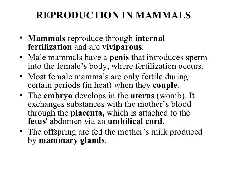 How Do Mammals Reproduce Sexually