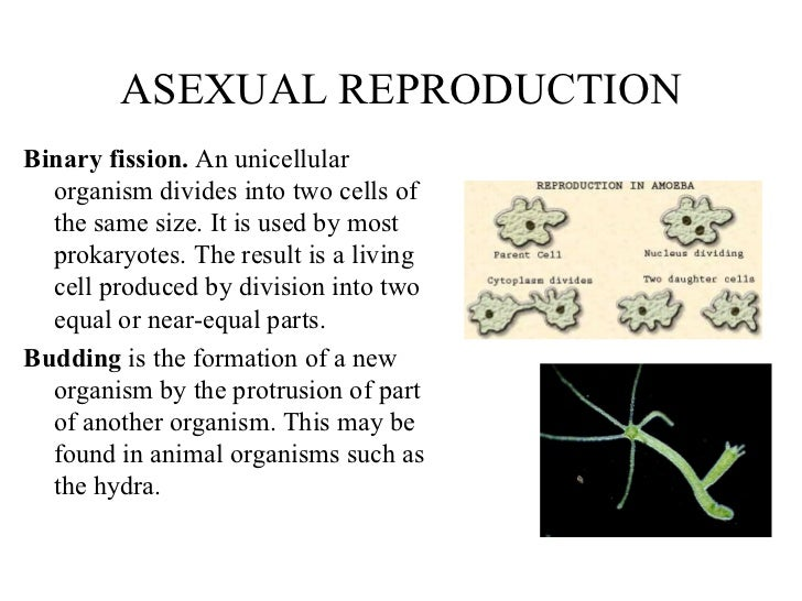 Three methods of asexual reproduction