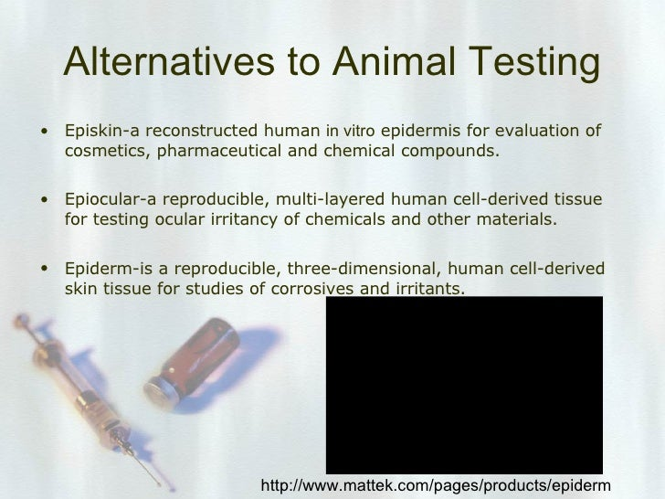 animal test  14 alternatives to animal