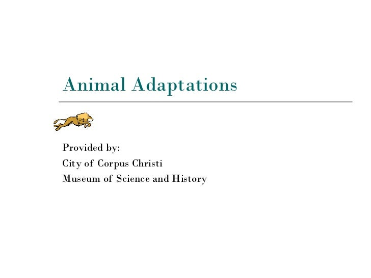 Animal Adaptations Provided by: City of Corpus Christi  Museum of Science and History