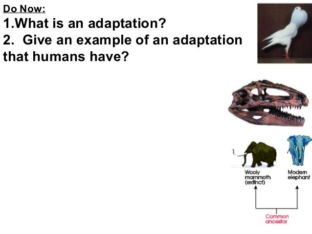 Do Now:  1.What is an adaptation? 2. Give an example of an adaptation that humans have?