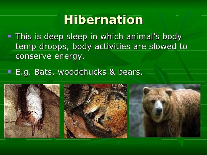 A study on behavioral adaptations hibernation in chipmunks