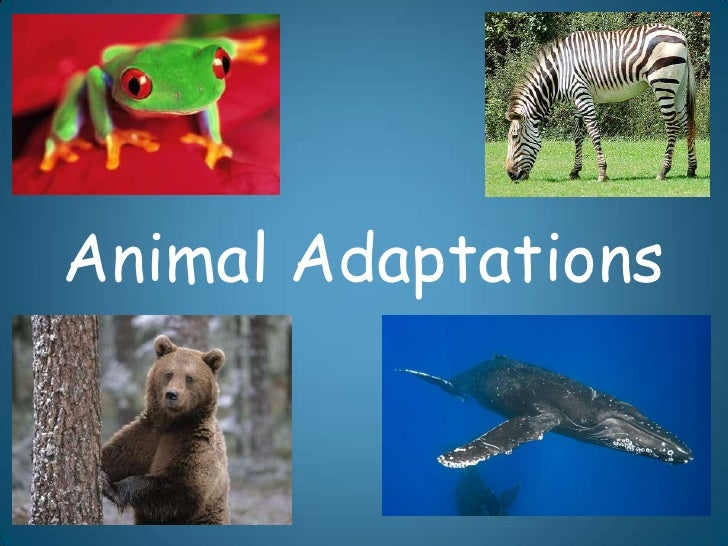 animal adaptation -#main