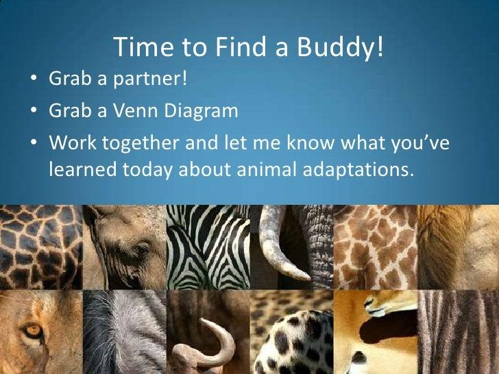 Animal Adaptations Introduction