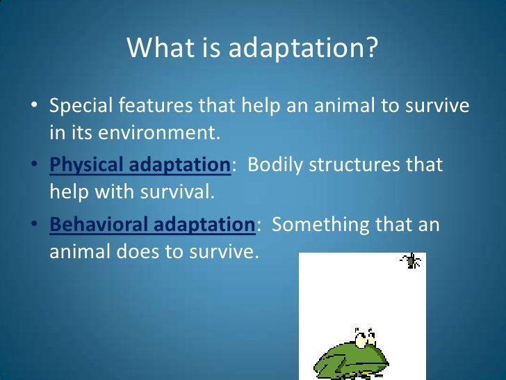 Animal Adaptations Introduction