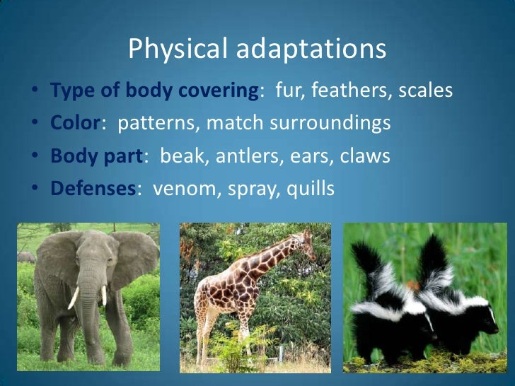 animal adaptation - photo #13