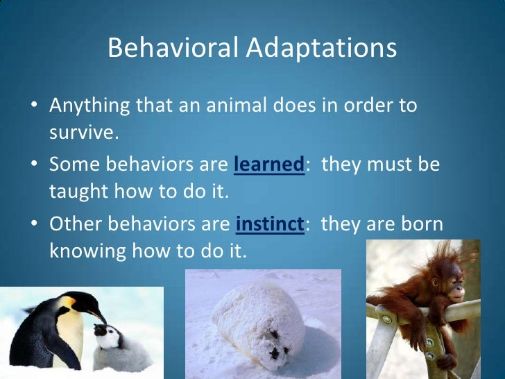 animal adaptation - photo #15