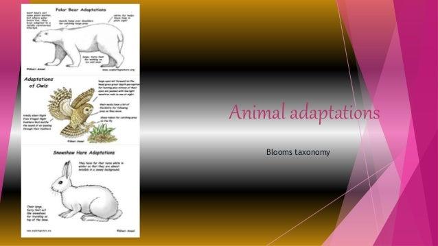 Animal adaptations Blooms taxonomy