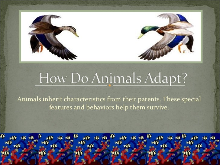 Animals inherit characteristics from their parents. These special features and behaviors help them survive.