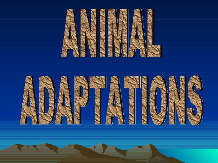 Animal Adaptations Review