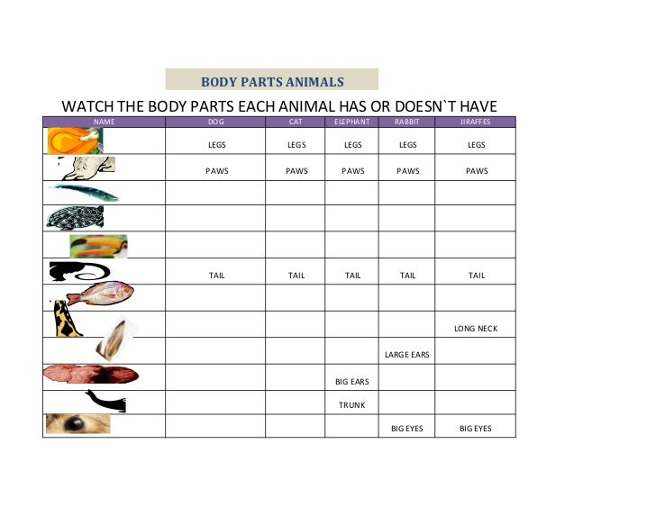 BODY PARTS ANIMALSWATCH THE BODY PARTS EACH ANIMAL HAS OR DOESN`T HAVE   NAME          DOG       CAT    ELEPHANT     RABBI...