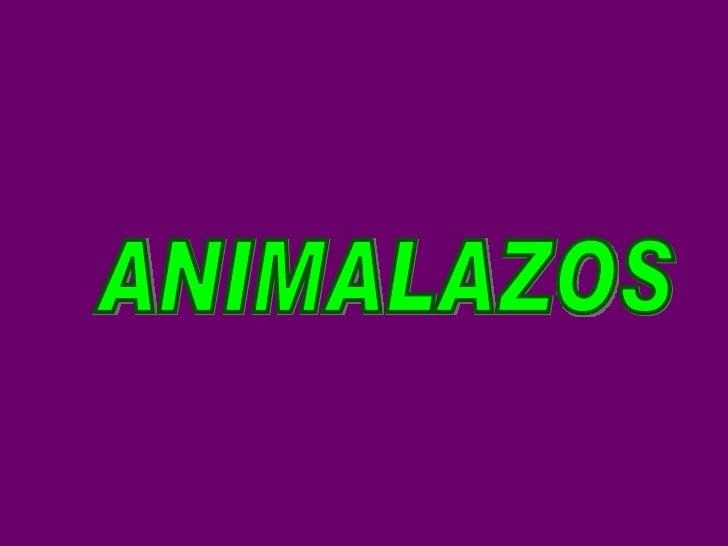 ANIMALAZOS