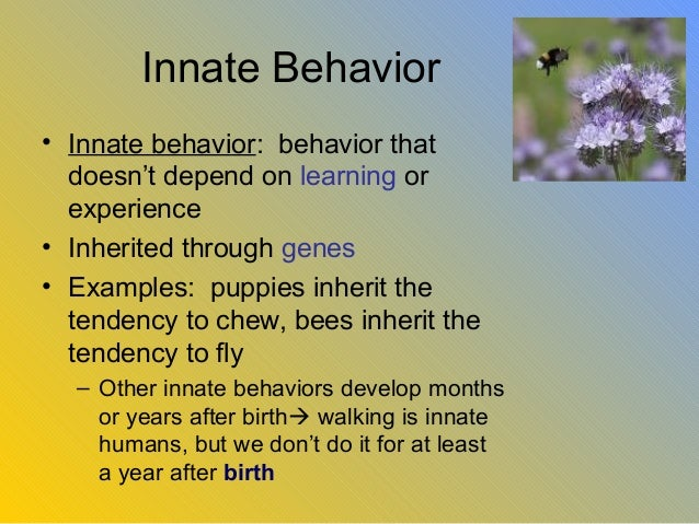 is human behavior innate