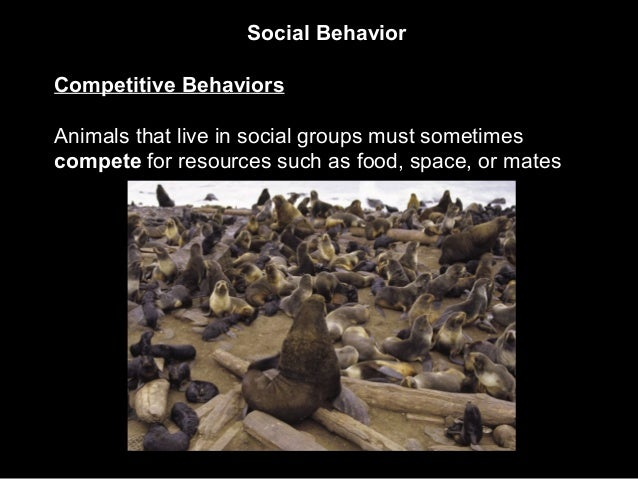 Social Behavior Competitive Behaviors Animals that live in social groups must sometimes compete for resources such as food...