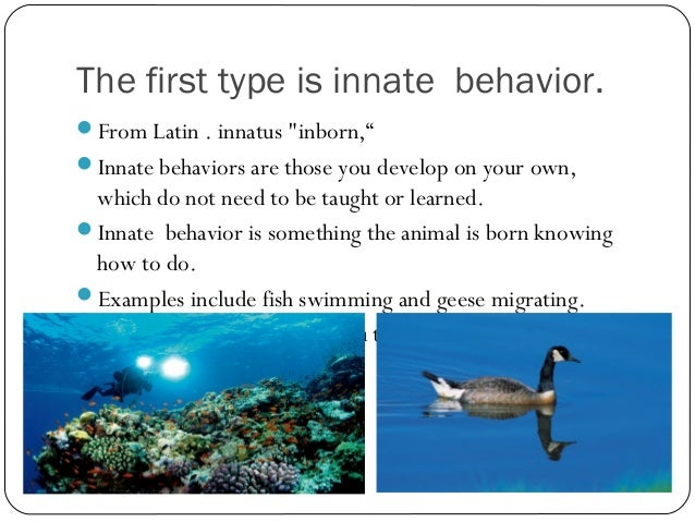 Animal Behavior Powerpoint