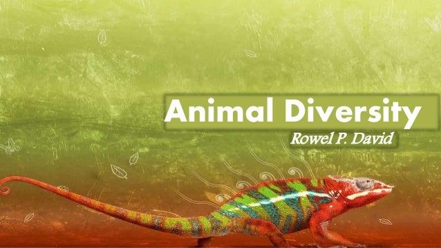 Animais invertebrados e vertebrados atividades