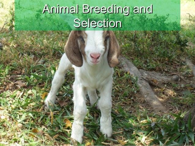 Animal Breeding andAnimal Breeding and SelectionSelection