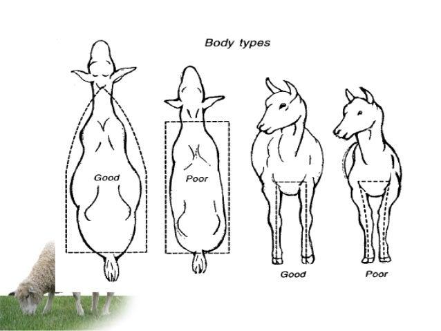 Animal breeding and selection