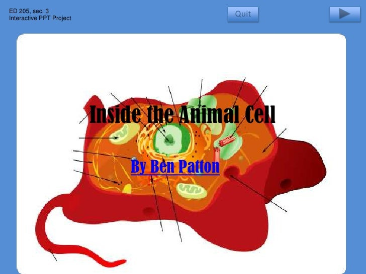 inside the animal cell