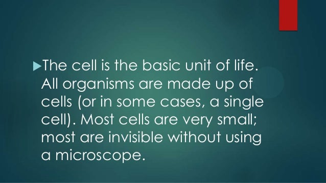 Animal cell anatomy power point animal cell anatomy basic unit of life 2 ccuart Gallery