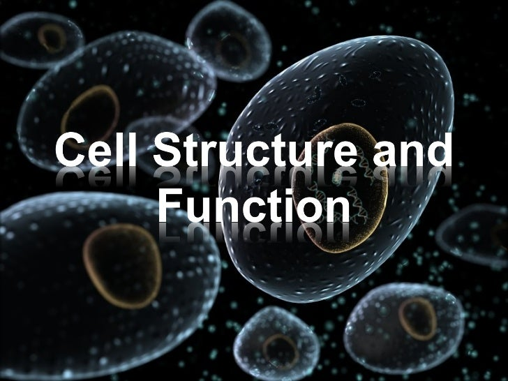Animal Cell Revision:Click a number to find the name and function of the organelle                     15     16          ...