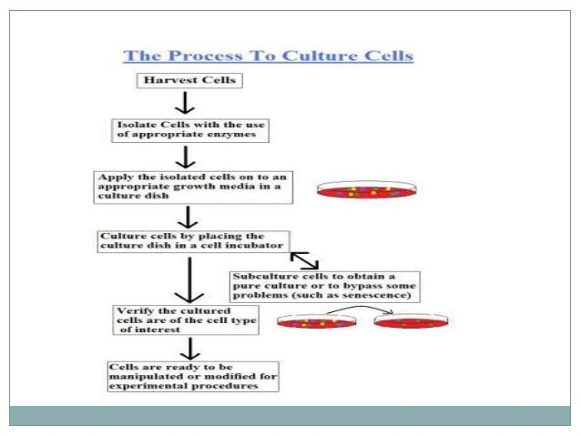 Animal cell, tissue culture