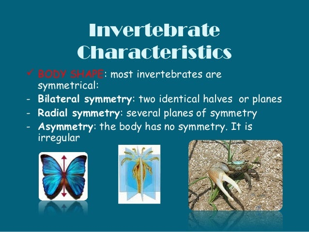 characteristics of vertebrates and invertebrates pdf