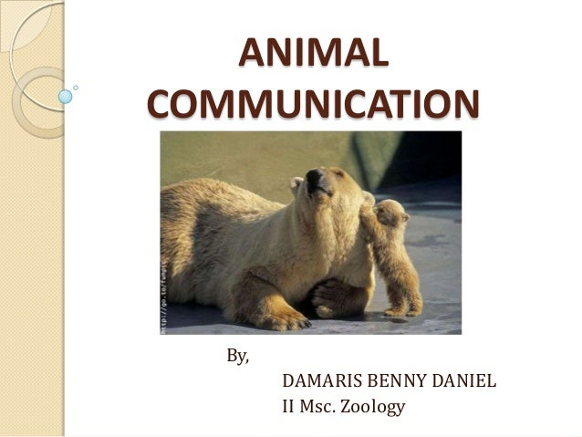 ANIMAL COMMUNICATION By, DAMARIS BENNY DANIEL II Msc. Zoology