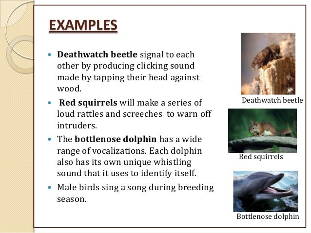 Animal behavior. Ppt video online download.