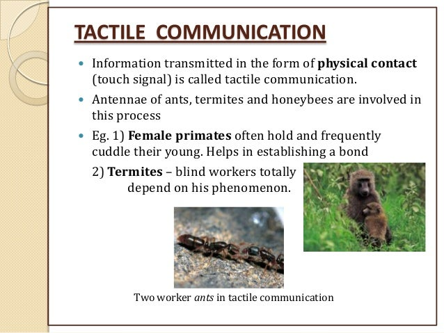 What is tactile communication and what are some examples in.