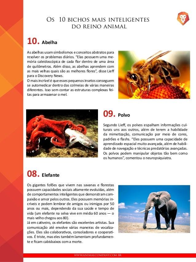 WWW.ANIMALCOMPANY.COM.BR Os 10 bichos mais inteligentes do reino animal 10. Abelha As abelhas usam simbolismos e conceitos...