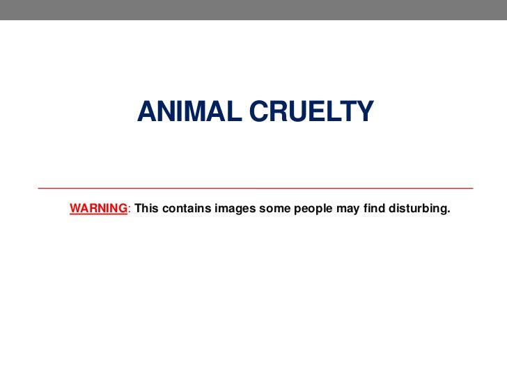 ANIMAL CRUELTYWARNING: This contains images some people may find disturbing.