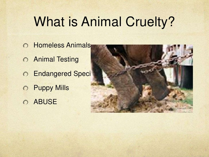what is animal abuse Battering, bullying, and beyond: the role of gender, power, and control in the link between animal abuse and human violence the abuse of animals by males to exert power and control over their victims – both humans and animals – is a constant theme in research.