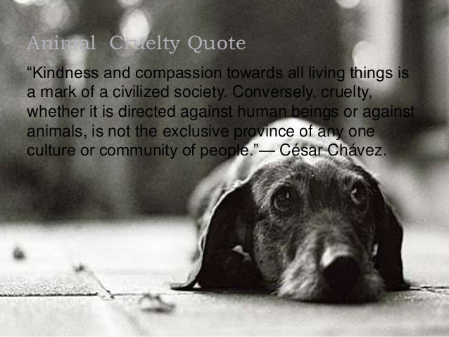 Animal Cruelty Quotes Extraordinary Animal Cruelty Presentation Done