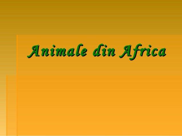 Animale din Africa