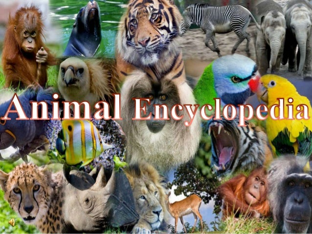  All animals are differrent  Some animals eats only other animal flesh. They are called Carnivores. Tiger,lion,wolf….. ...