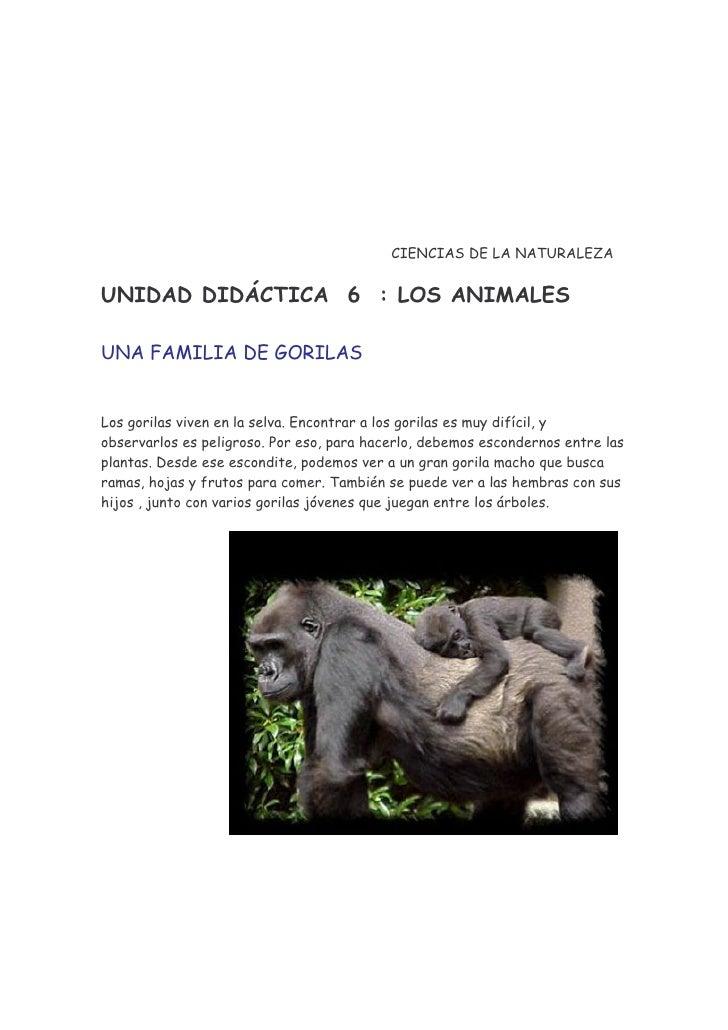 CIENCIAS DE LA NATURALEZA   UNIDAD DIDÁCTICA 6 : LOS ANIMALES  UNA FAMILIA DE GORILAS   Los gorilas viven en la selva. Enc...