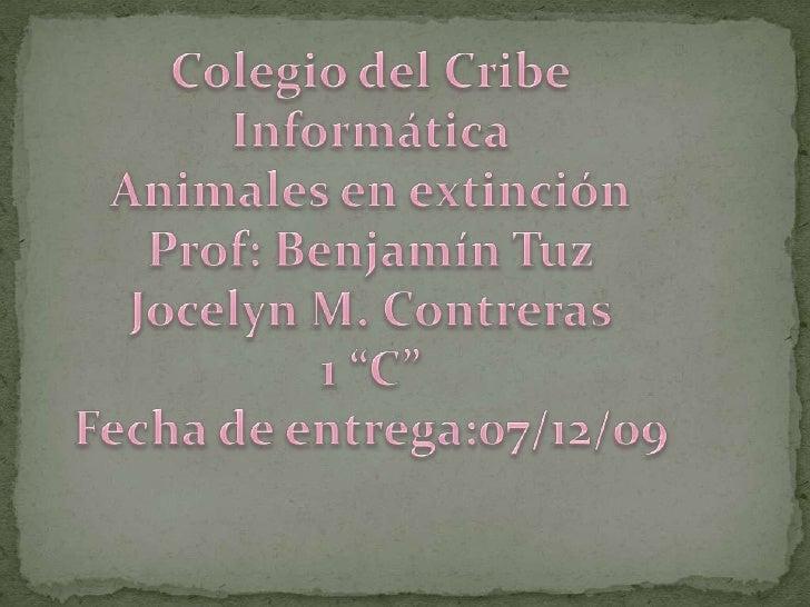 """Colegio del Cribe<br />Informática<br />Animales en extinción<br />Prof: Benjamín Tuz<br />Jocelyn M. Contreras<br />1 """"C""""..."""