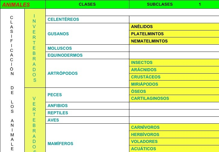 ANIMALES CLASES SUBCLASES  1 C  L  A  S  I  F  I  C  A  C  I  Ó  N D E L O S A N I M A L E S I   N   V   E   R   T  ...
