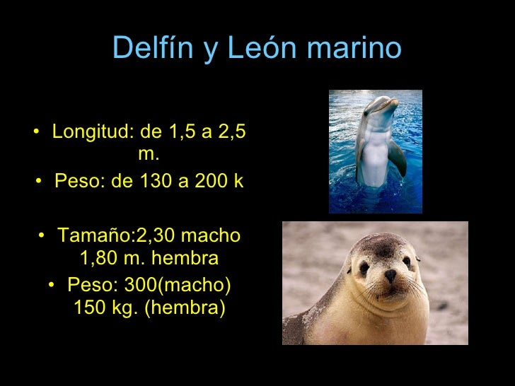 Delfín y León marino <ul><li>Longitud: de 1,5 a 2,5 m. </li></ul><ul><li>Peso: de 130 a 200 k </li></ul><ul><li>Tamaño:2,3...