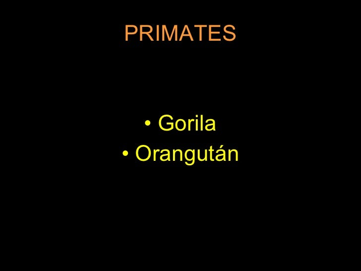 PRIMATES <ul><li>Gorila </li></ul><ul><li>Orangután </li></ul>