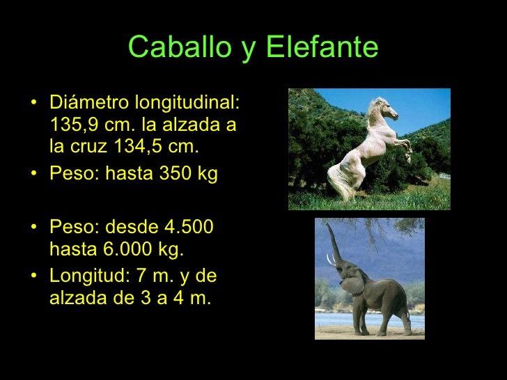 Caballo y Elefante <ul><li>Diámetro longitudinal: 135,9 cm. la alzada a la cruz 134,5 cm. </li></ul><ul><li>Peso: hasta 35...