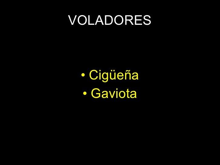 VOLADORES <ul><li>Cigüeña </li></ul><ul><li>Gaviota </li></ul>