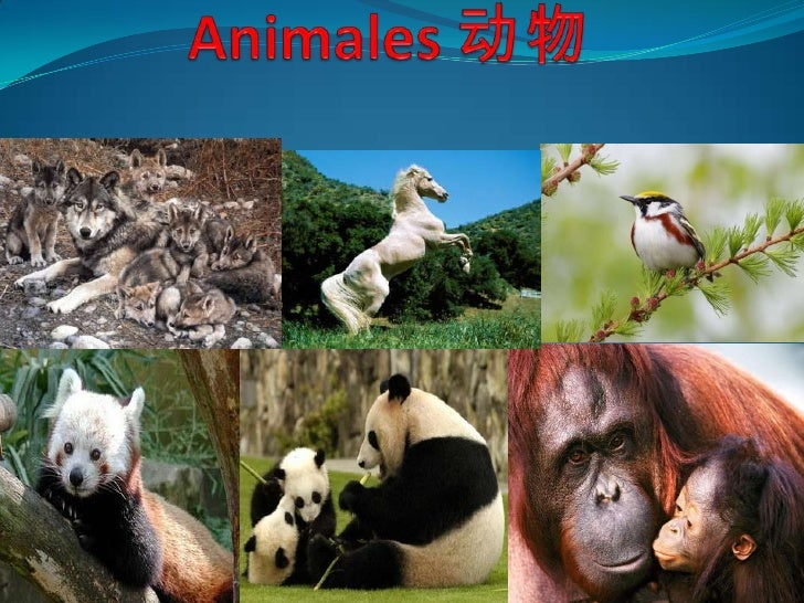 Animales 动物<br />