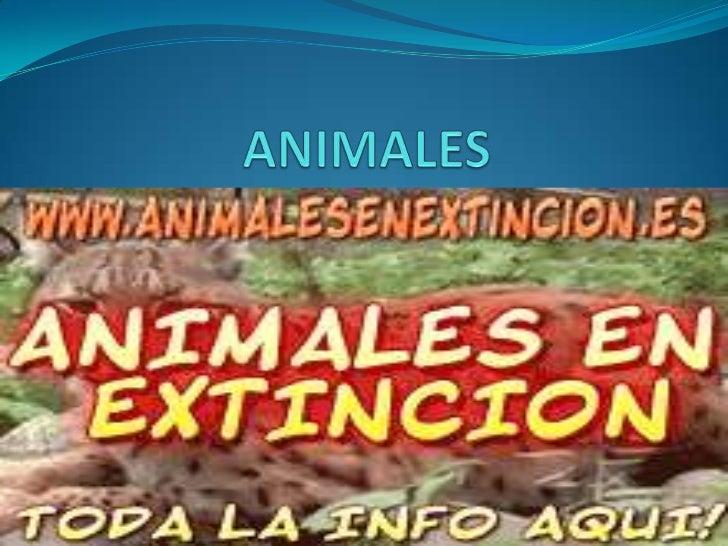 ANIMALES<br />