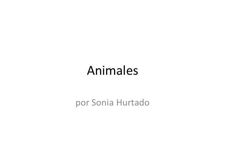 Animales<br />por Sonia Hurtado<br />