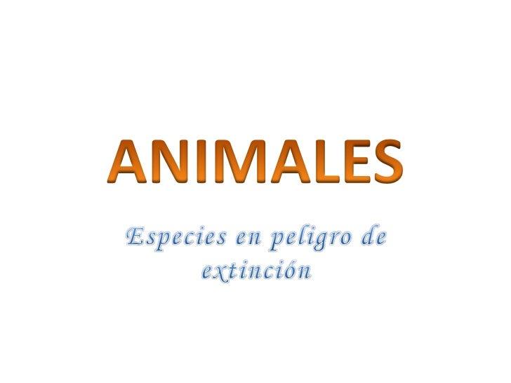 ANIMALES<br />Especies en peligro de extinción<br />