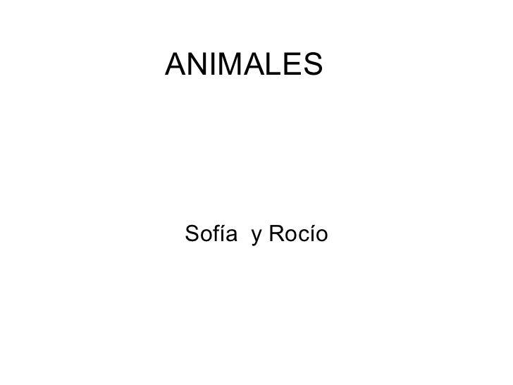 ANIMALES Sofía  y Rocío