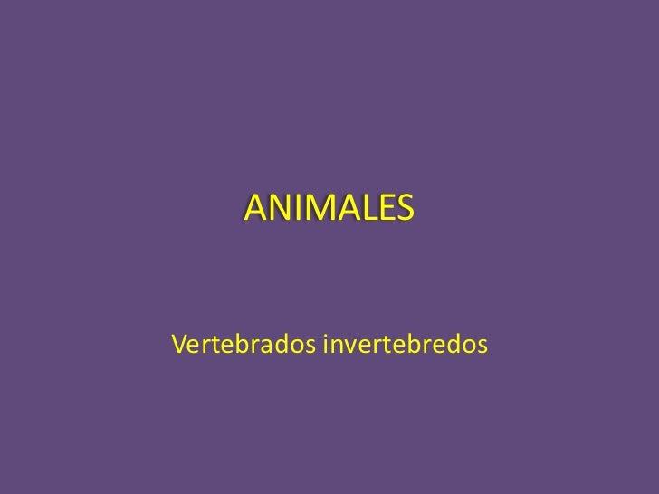 ANIMALESVertebrados invertebredos